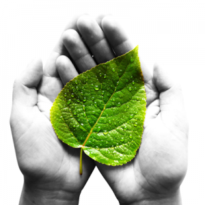 leaf_in_hand